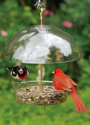 X-1 feeder-with-seed droll yankees - www.birdfeedershoppe.com