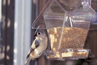 Window Cafe Hopper - Transparent Window Feeder