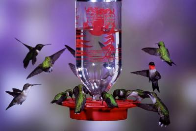 The Original Best-1 Hummingbird Feeder 32 oz