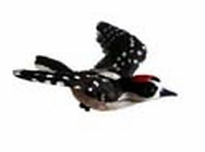 Downy Woodpecker Window Magnet CC52032