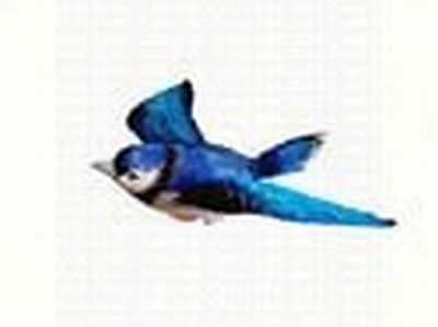 Blue Jay Window Magnet CC52008