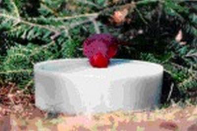 Wild Bird Super Solar Sipper (White)