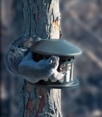 Squirrel Diner 2