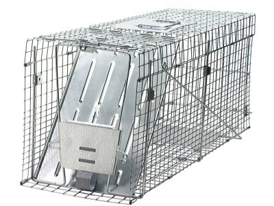 Raccoon Collapsible Trap 32X10 1/2X12 ½