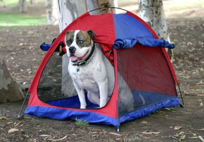 Pet Tent & Shelter - Large