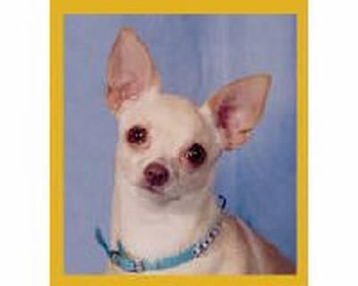 Chihuahua Peppita