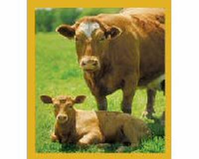 Cow With Calf (Brown)