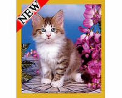 Flower Garden Kitten
