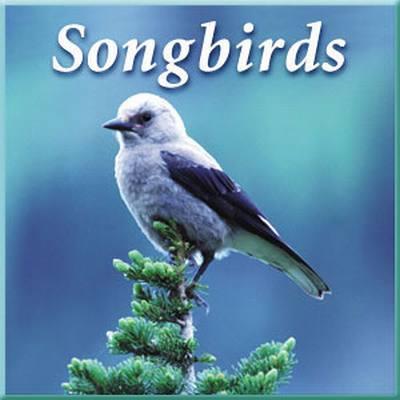 Songbirds CD