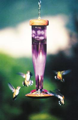 Etched Glass Amethyst Hummingbird Lantern