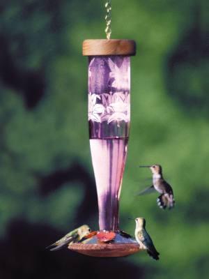Paradise Tri-Etched Amethyst Glass Hummingbird Lantern