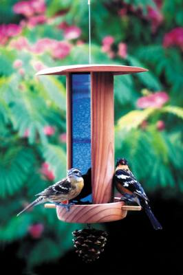 Songbird Lantern Classic Bird Feeder