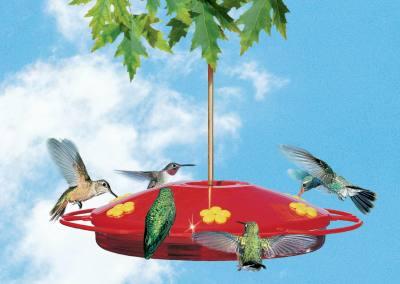 Hummingbird Oasis 16 oz Feeder