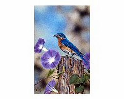 Bluebird & Morning Glories 11x14 Print