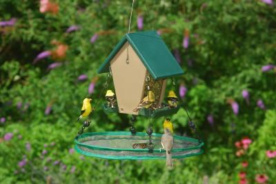 Seed Hoop 16 in