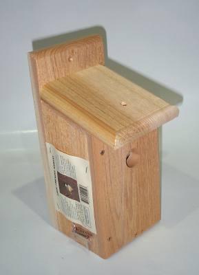 Songbird Cedar Chickadee Habitat