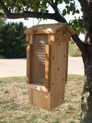 Ultimate Woodpecker Feeder