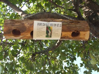 Suet Log – Upside Down