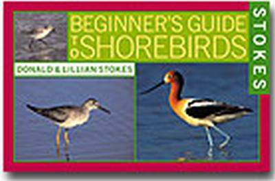 Beginners Guide to Shore Birds