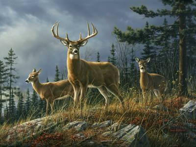 Deer Autumn Whitetail - Small