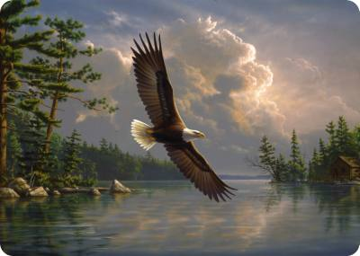 Eagle - Medium