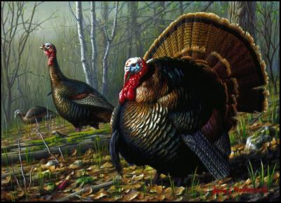 Turkeys - Small