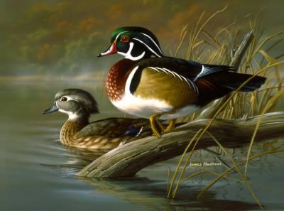 Wood Ducks - Small