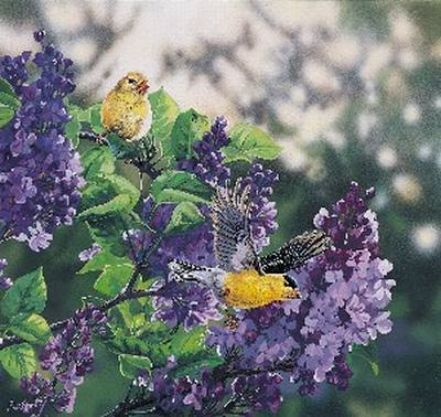 Goldfinch - Medium