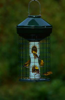 Vari-Crafts Caged Avian Mixed Seed Bird Feeder