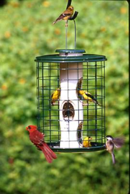 Squirrel Proof Caged Sunflower or Mixed Seed Bird Feeder