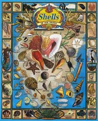 Shells of Our Shores 1000 Piece Jigsaw Puzzle