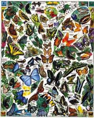 Butterflies of the World 1000 Piece Jigsaw Puzzle