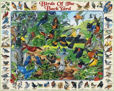 Birds of the Backyard 1000 Piece Jigsaw Puzzle