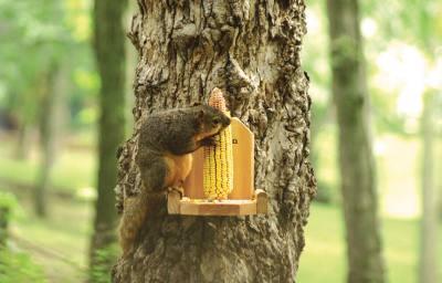 Ear Corn Holder