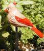 Female Cardinal Garden Bird Stick