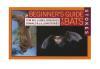 Beginning Guide to Bats