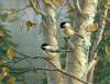 Chickadee/ Medium